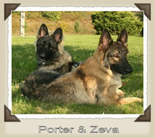 Porter and Zeva laying in the yard